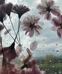 The Blossom Mandala 5 by Kristen Cooney