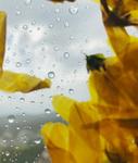 The Blossom Mandala 6 by Kristen Cooney
