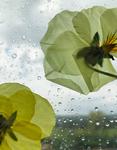 The Blossom Mandala 7 by Kristen Cooney