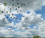 The Blossom Mandala 10 by Kristen Cooney