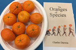 The Oranges of Species by Information Technology Department